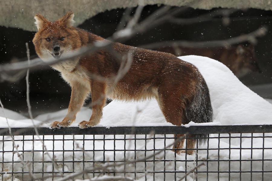 Каждый год в зоопарках Европы убивают тысячи животных