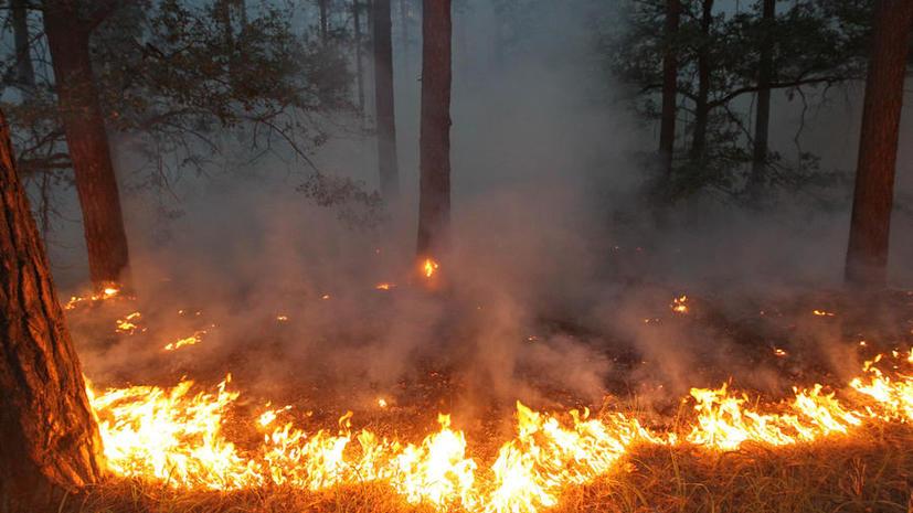Лесной пожар подошёл к детскому лагерю в Нижегородской области, 250 детей эвакуированы