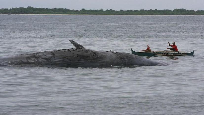 Исландия возобновила охоту на китов