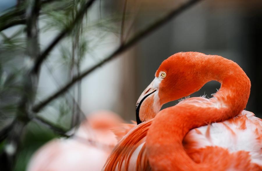 Орнитологи: Голуби - близкие родственники фламинго
