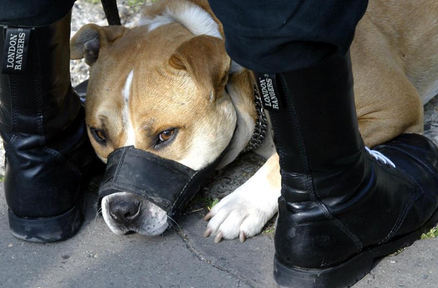 Мужчина получил 15 лет тюрьмы за насилие над собаками