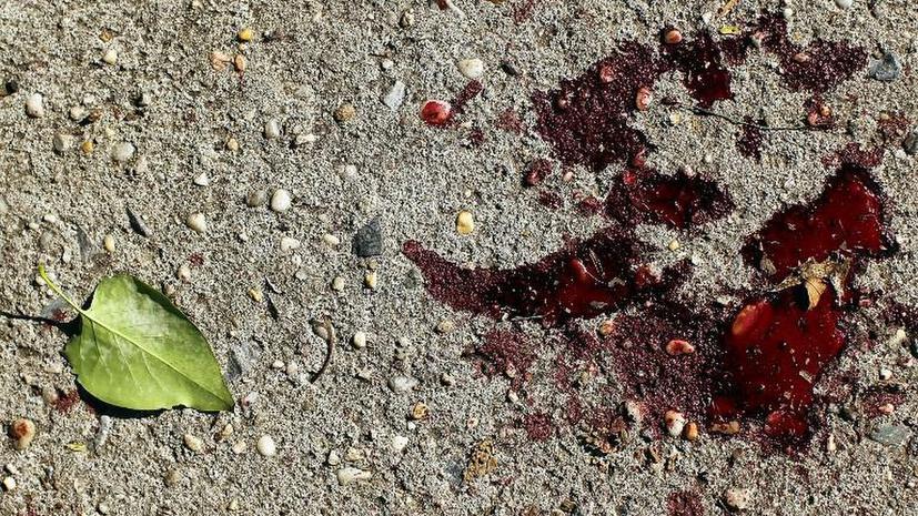 Семья сотрудника Госнаркоконтроля зверски убита в Санкт-Петербурге