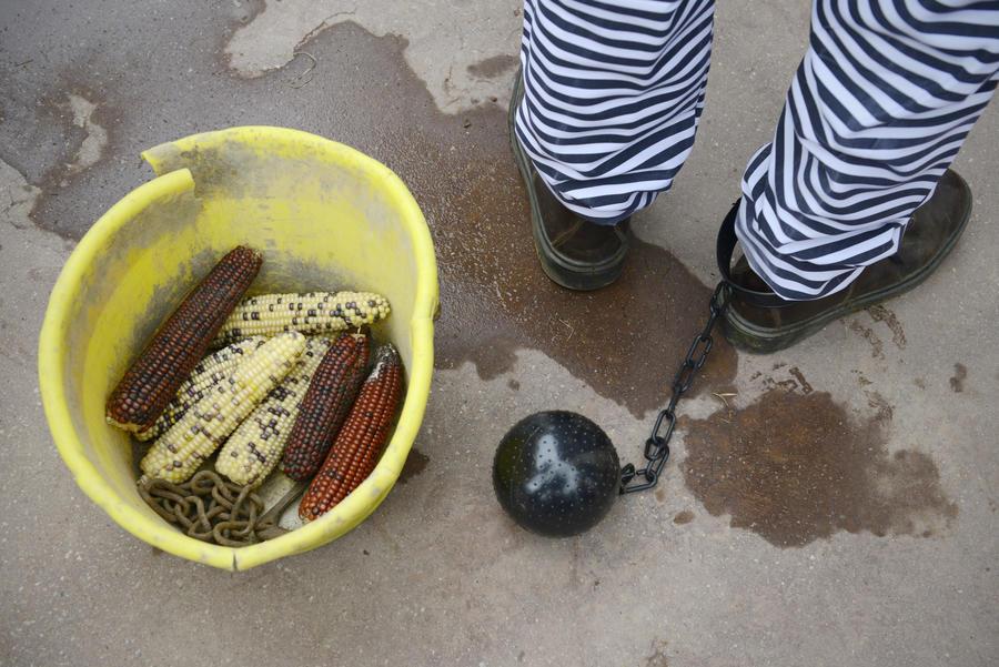 Депутаты могут приравнять производителей ГМО к террористам