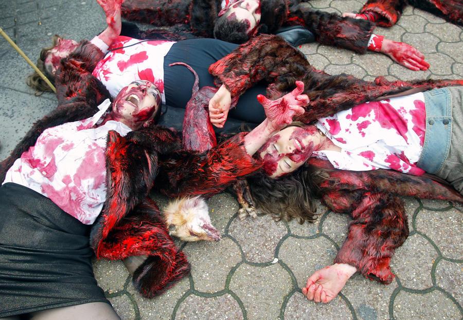 Американские защитники прав животных усыпили десятки тысяч кошек и собак