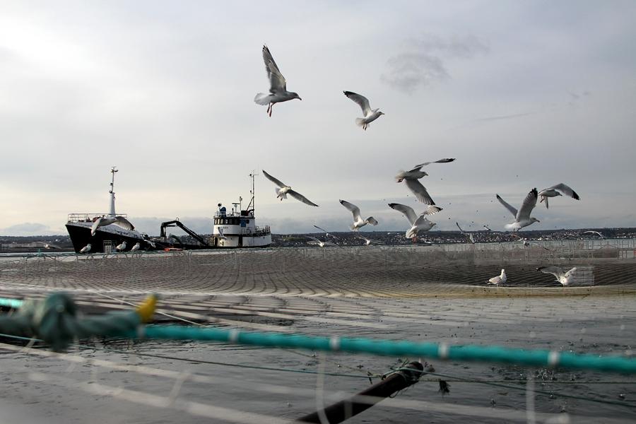 Японцы спасают в Тихом океане российский траулер