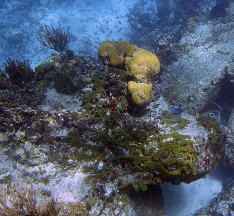 Учёные синтезировали из морских губок новое лекарство от рака