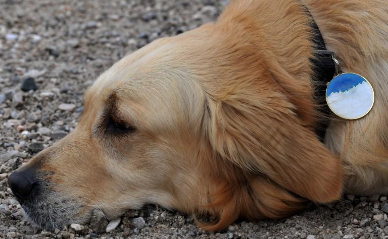 В Англии приют для животных получил крупное наследство от вдовы, а потом усыпил ее собаку