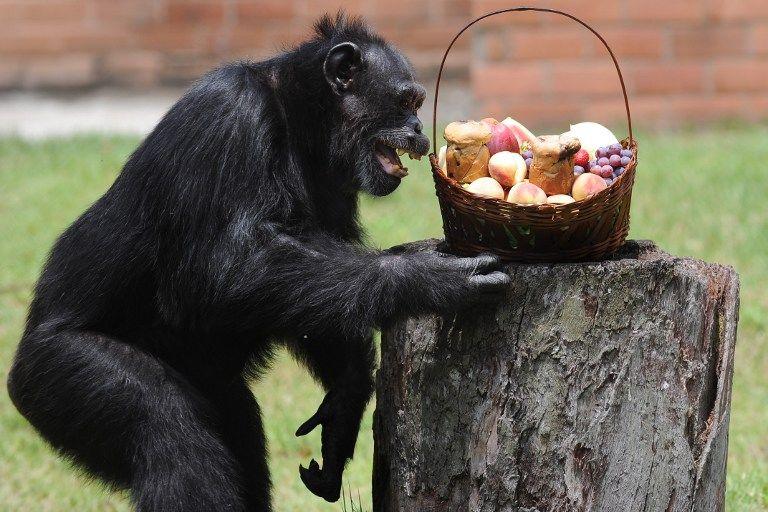 Животные путают собственные фантазии с реальностью