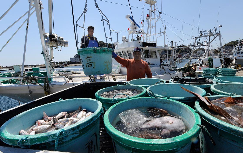 В водах близ Фукусимы обнаружена смертельно опасная рыба