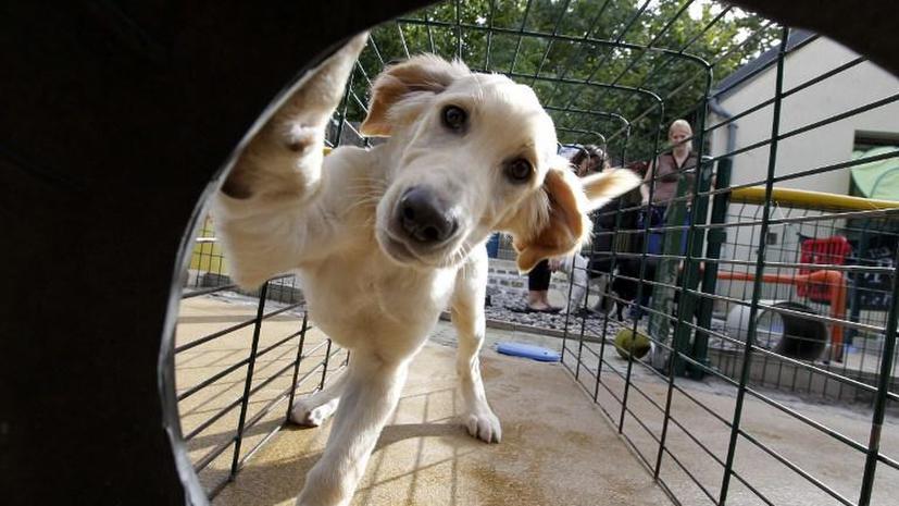 В США страдающей эпилепсией девочке запретили приходить в школу с собакой-поводырем