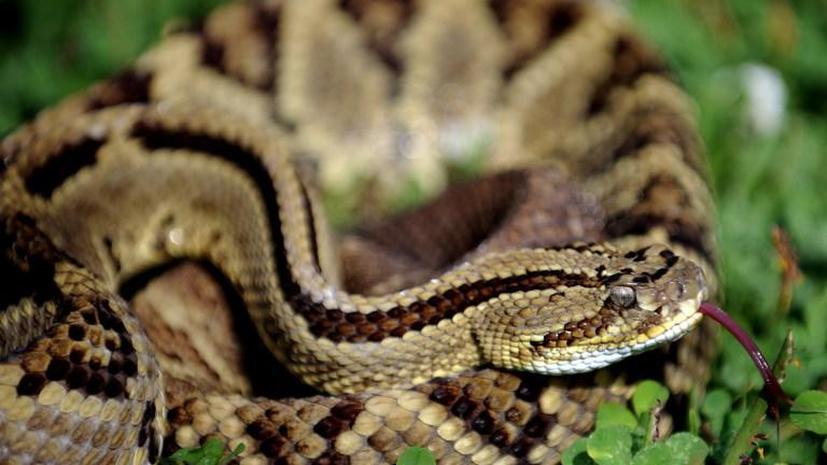 Десятки ядовитых змей ускользнули из серпентария в Аргентине