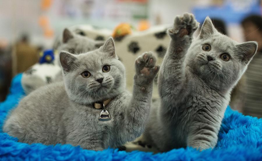 Жителям Лос-Анджелеса разрешили держать дома больше кошек