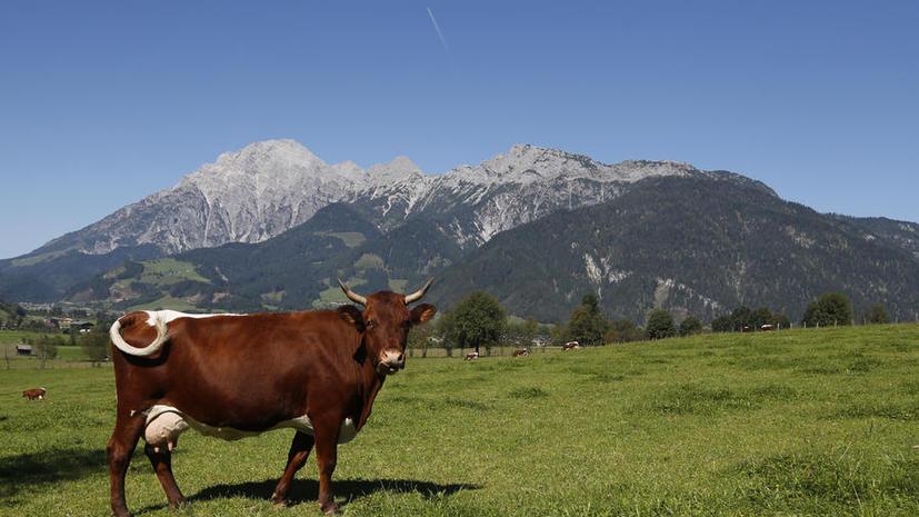 Ограничительные меры России уже обошлись австрийским фермерам в €4,5 млн