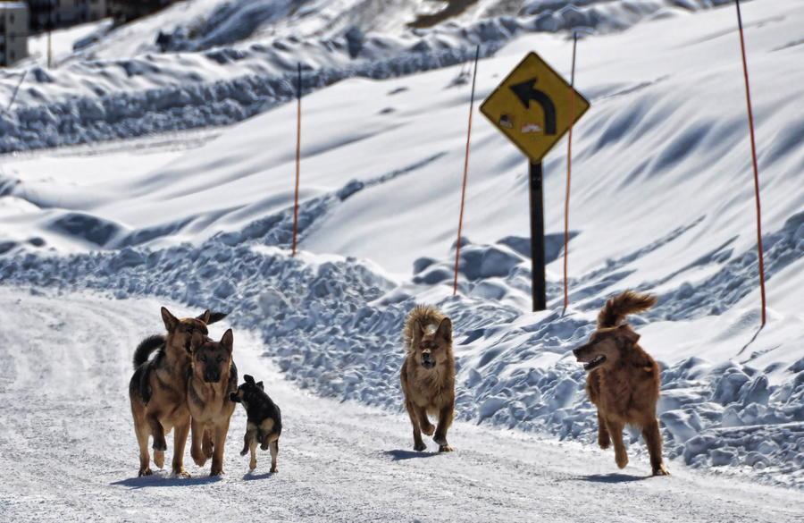 15 тыс. туристов застряли в горах между Чили и Аргентиной из-за снегопада