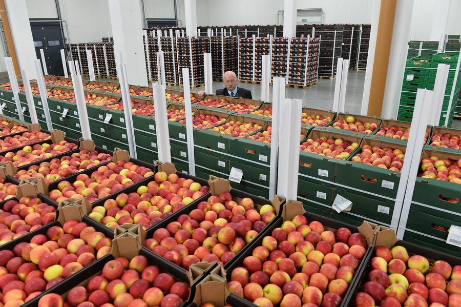 Польша попросила США выкупить яблоки, от которых отказалась Россия