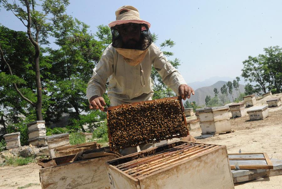 Эксперты: В США массово умирают медоносные пчёлы
