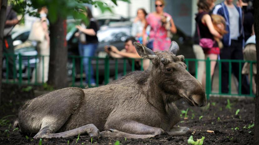 Канадские учёные: люди - причина болезней диких животных