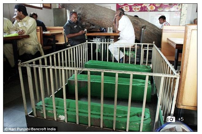 В одном из индийских ресторанов можно пообедать среди могил