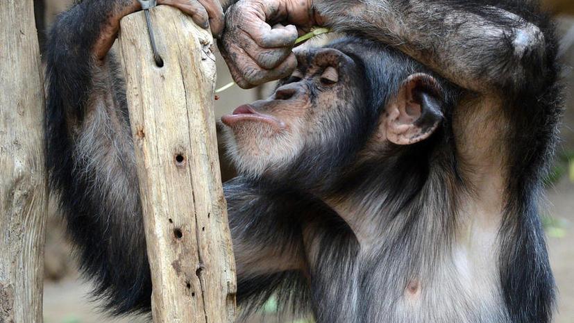 Антропологи: животные чувствуют настоящее горе из-за смерти близких