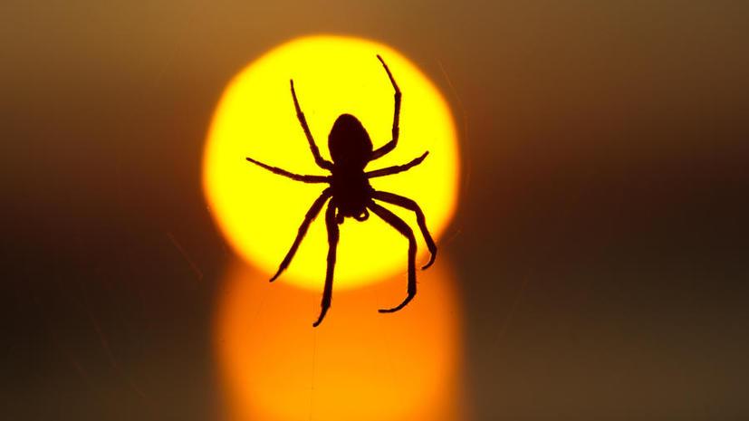 Ядовитые пауки «закрыли» британскую школу