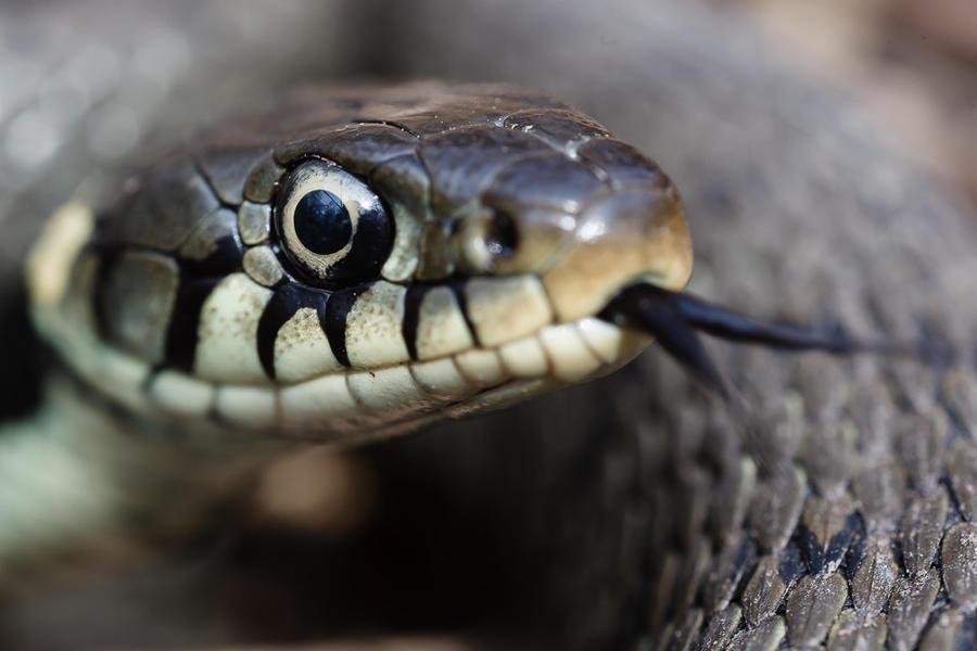Змея пробралась на борт пассажирского самолёта авиакомпании Qantas