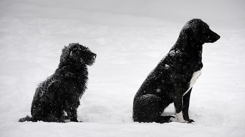 Московские догхантеры готовятся к массовому убийству собак