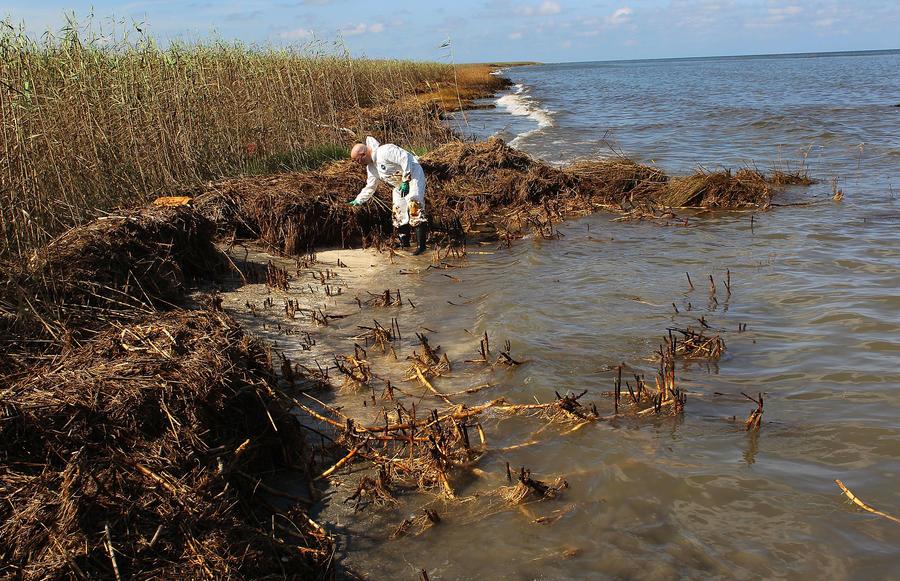 Загрязнение водоёмов США привело к появлению «мёртвых зон», полных токсичными  водорослями