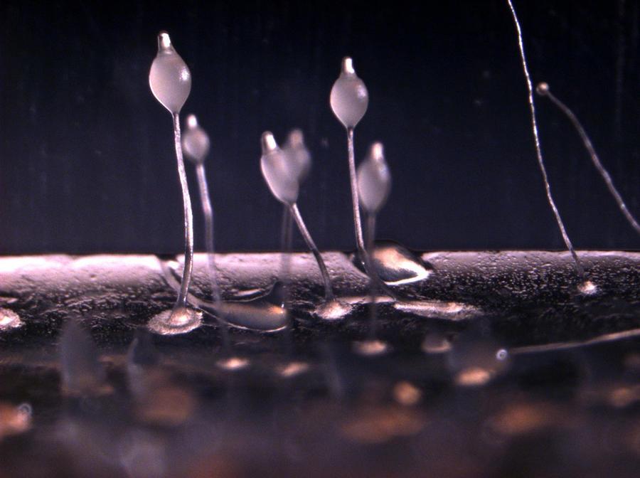 Поедающая мозг амёба обнаружена в водопроводной воде в Луизиане