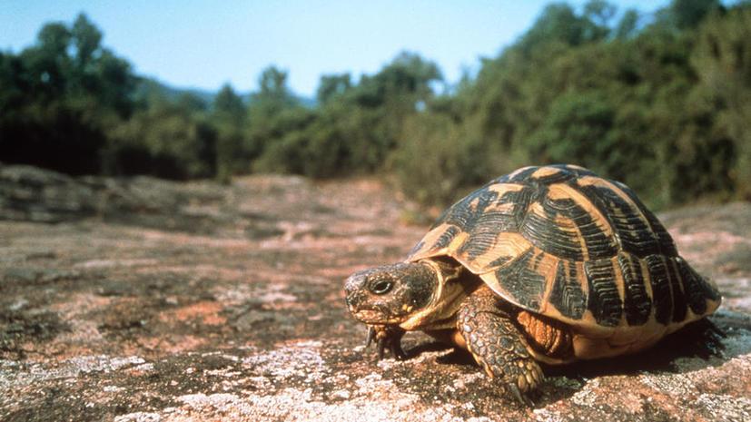 Около тысячи черепах в США усыпят из-за бюджетных сокращений