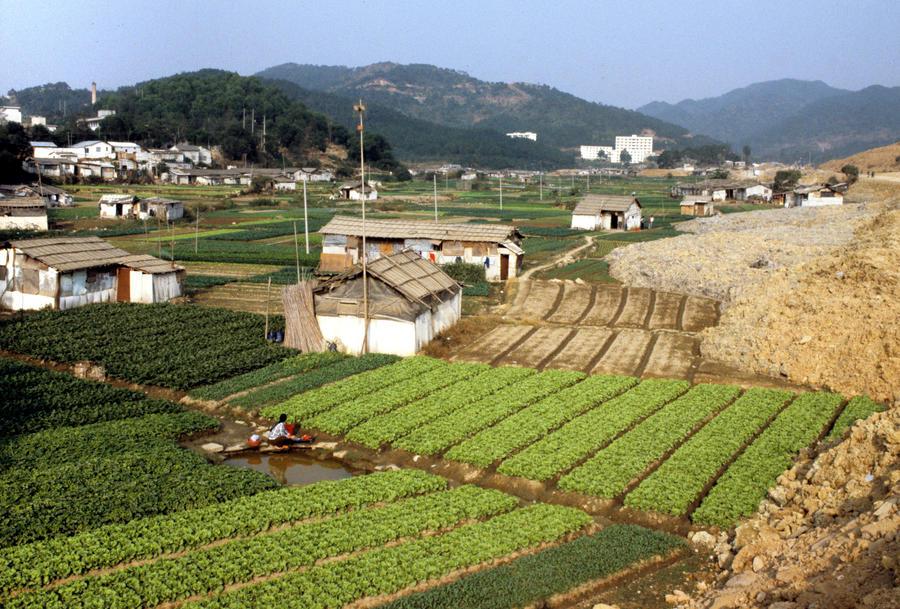 Доклад: Более одной пятой сельскохозяйственных земель Китая токсичны