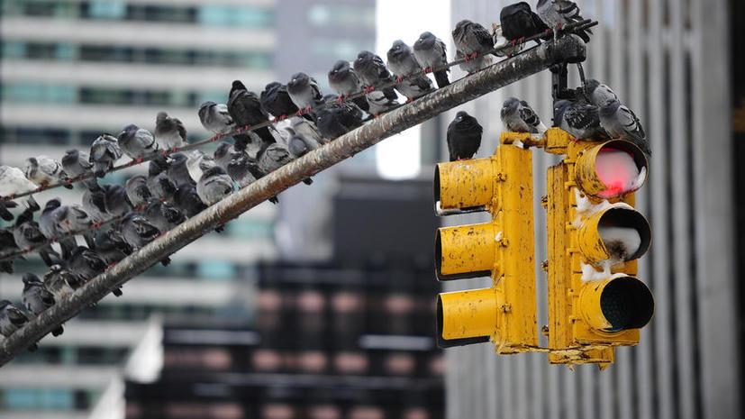 В Лос-Анджелесе синхронизировали 4400 светофоров