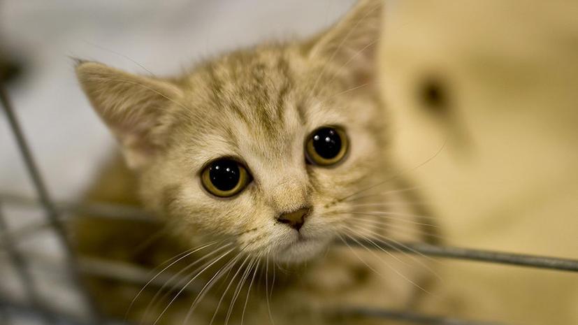 Американка хранила в холодильнике 67 кошачьих трупов
