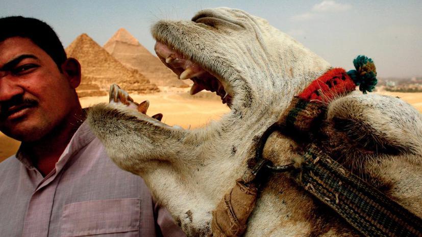 Власти Египта хотят сдать в аренду Сфинкса и пирамиды