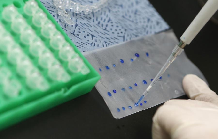 Учёные: Генно-модифицированные бактерии смогут обнаруживать раковые опухоли