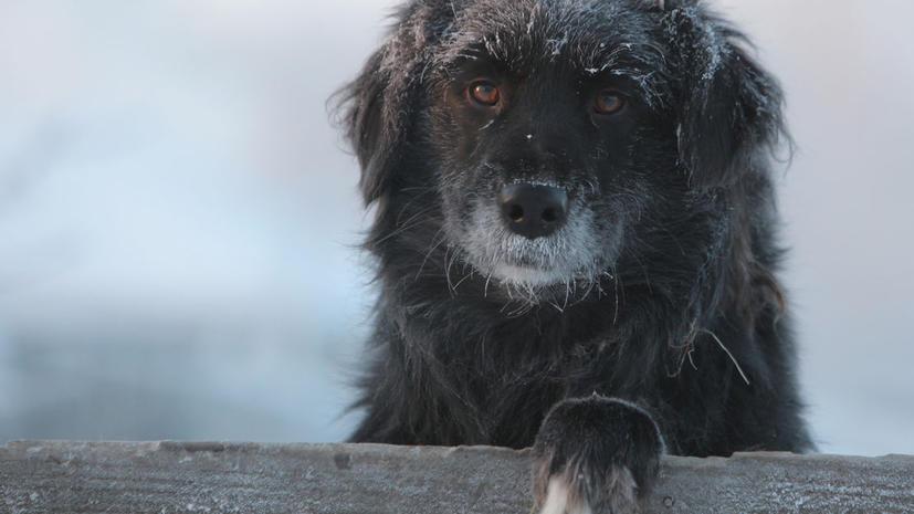 Десятки собак пошли на шапки в Красноярске