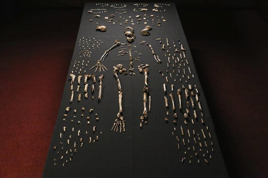 Учёные из Южной Африки открыли новый вид древнего человека