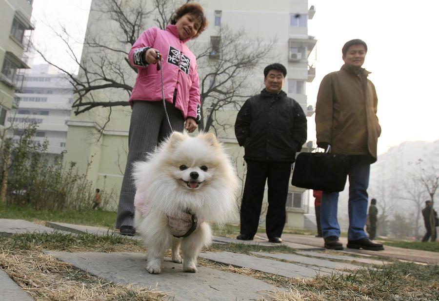 Хозяева крупных собак бегут из Пекина ради спасения питомцев