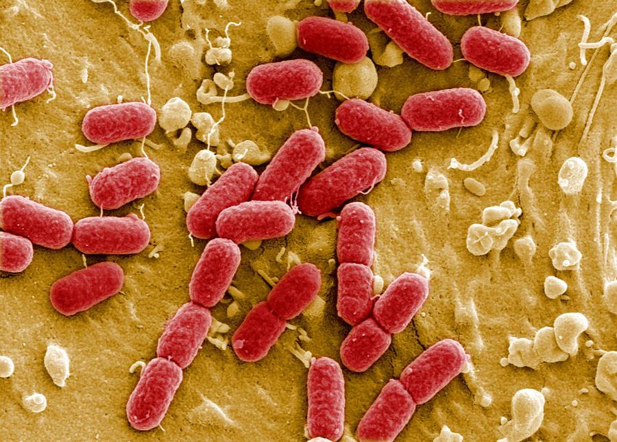 В Великобритании впервые обнаружены бактерии-мутанты, против которых бессильны антибиотики