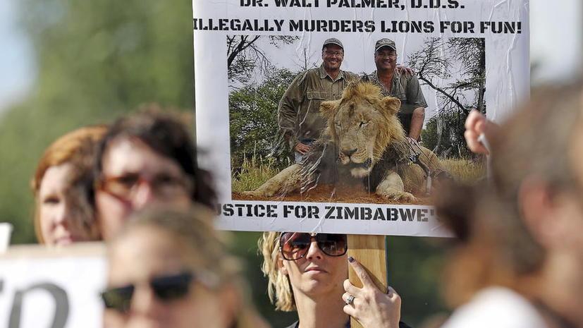 В Зимбабве запретили охоту на диких животных после громкого убийства льва Сесила