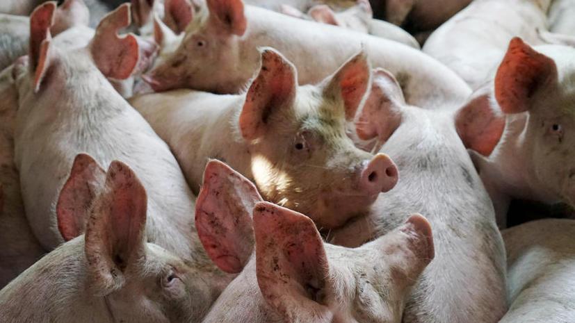 В ООН предложили не обижать животных и народы названиями болезней