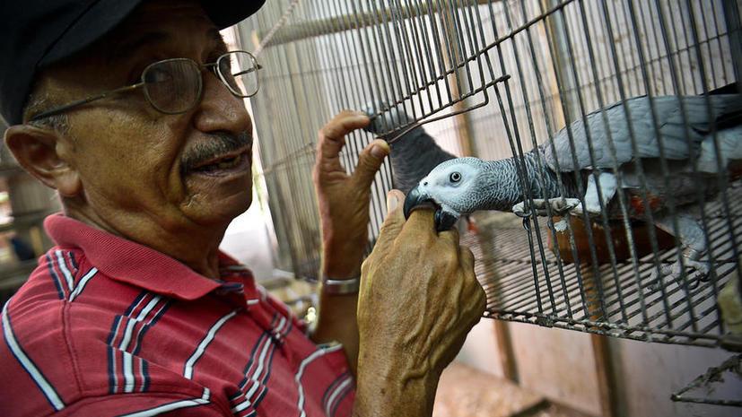 Вледельцу слишком говорливого попугая в США грозит уголовная ответственность