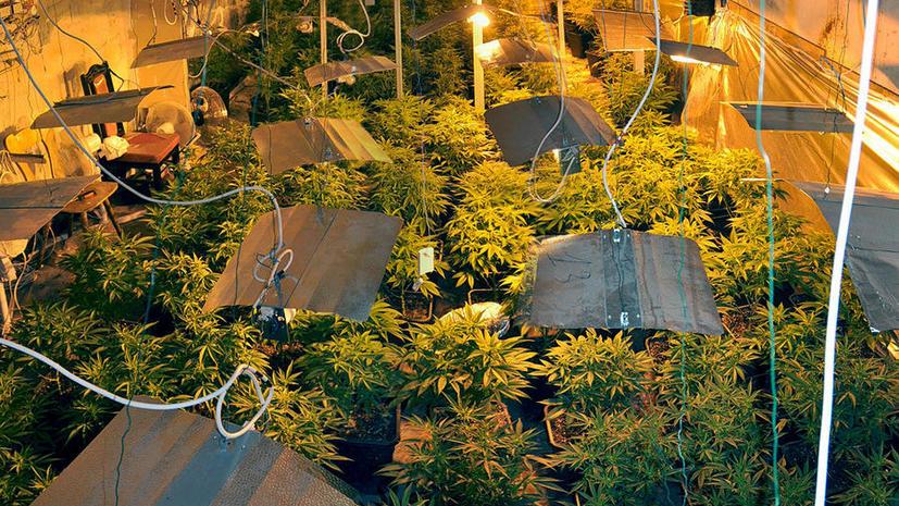 Дом на солнечных батареях оказался пристанищем наркоторговцев