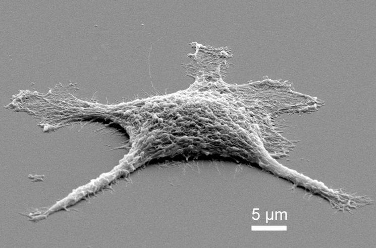 В лаборатории университета США создают зомби