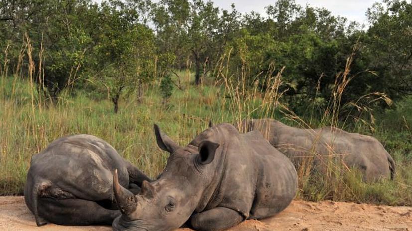 Охотники за браконьерами разбились на вертолете в ЮАР
