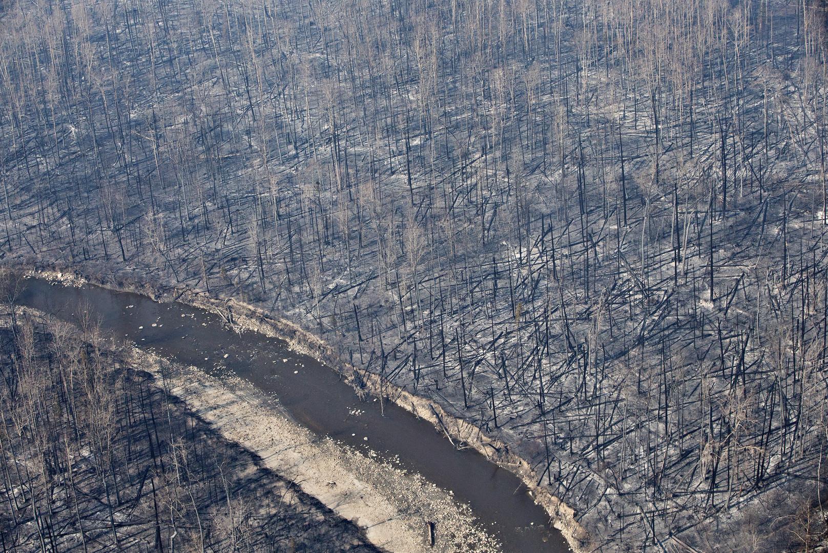 Уничтоженный огнём лес в канадской провинции Альберта