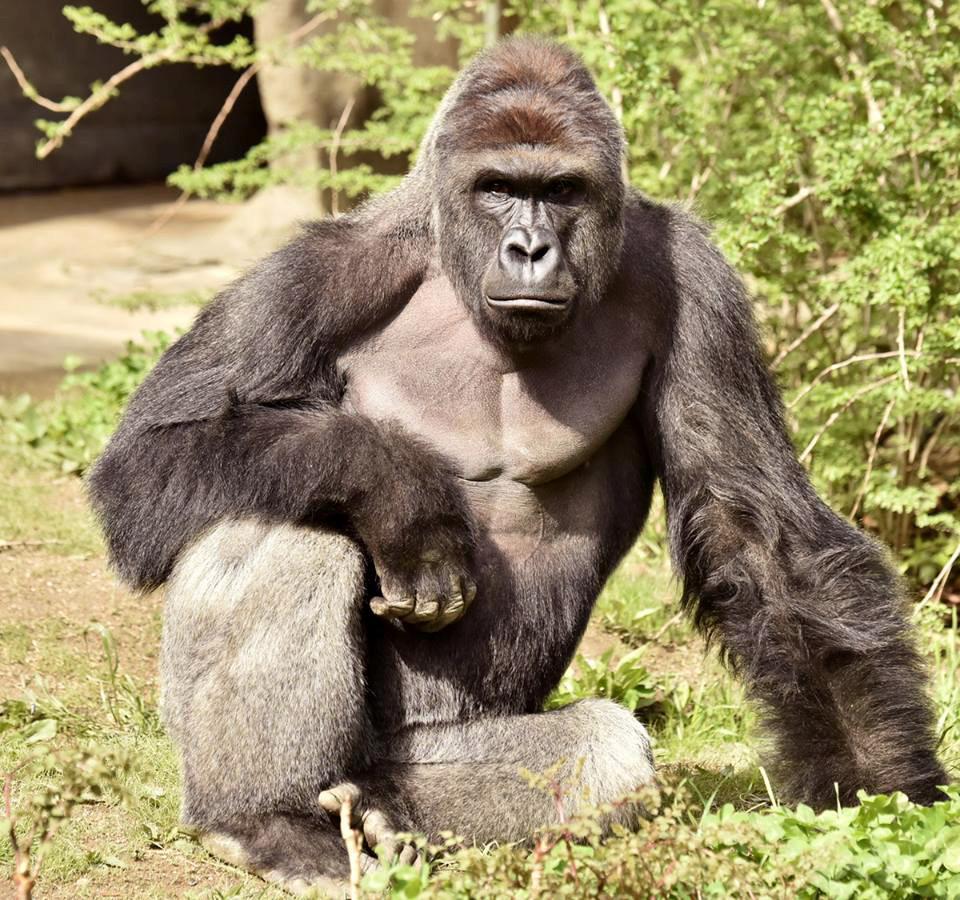 От образовательных целей до угрозы безопасности: как и зачем убивают животных в зоопарках