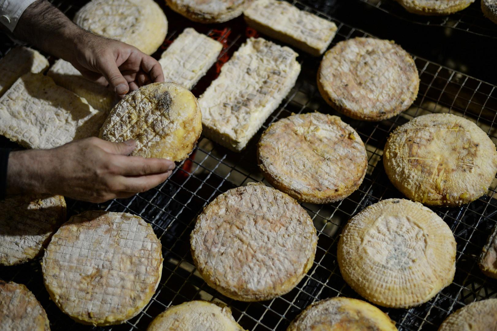 Сыр в камере, в которой проходит один из этапов изготовления сыра, на ферме в деревне Масловка Липецкой области.
