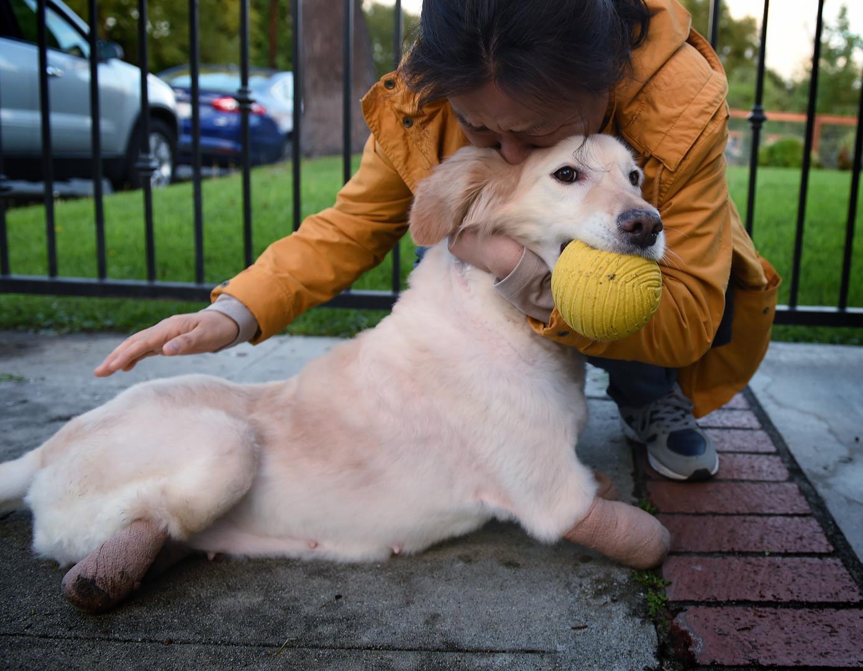 Собаки-терапевты помогали пострадавшим при стрельбе в Орландо