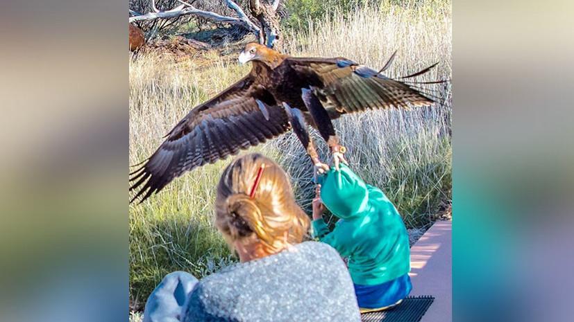 В Австралии орёл попытался унести ребёнка