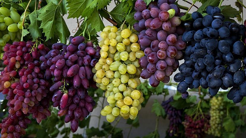 СМИ: В России могут появиться новые винодельческие регионы
